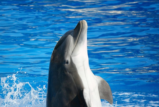 Dolphin Facts For Kids | Cool Kid Facts