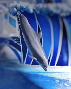 cool dolphin picture