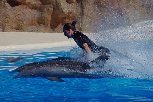 dolphin swimming with person