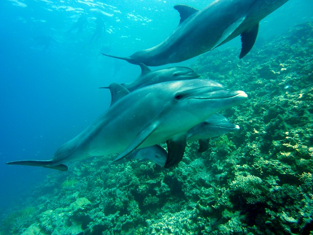 dolphins diving