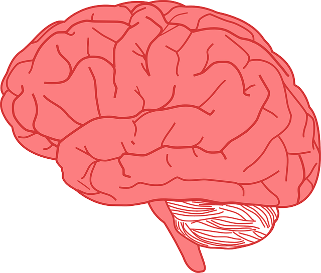 Facts about the human brain cool kid facts pink brain ccuart Images