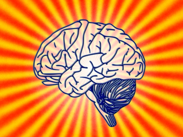 Facts About The Human Brain Cool Kid Facts