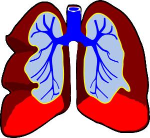 the heart diagram