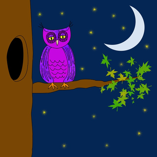 the moon and owl