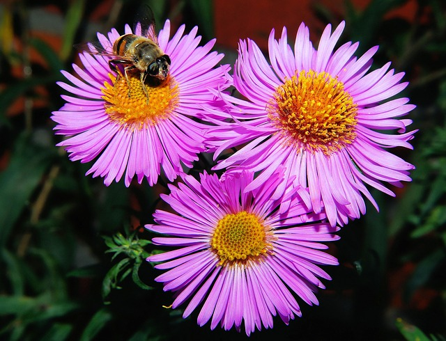 plant with bee