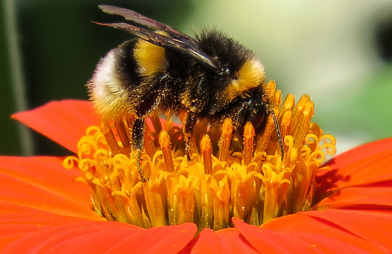 Pollination | Cool Kid Facts