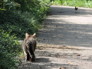 cat.stalking