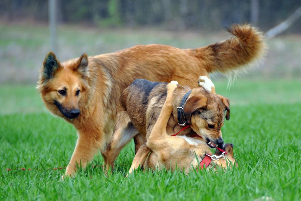 dogs communicating