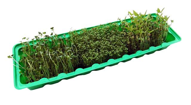 germination facts