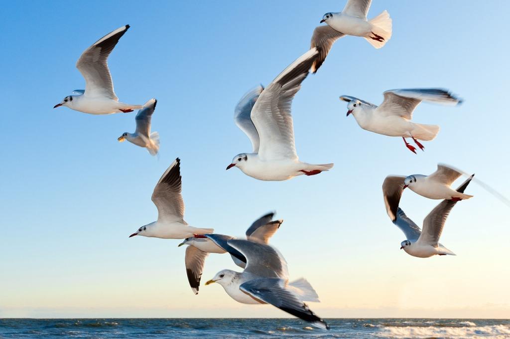 gulls-birds