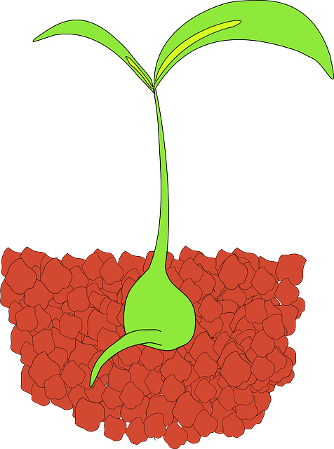 sprout root