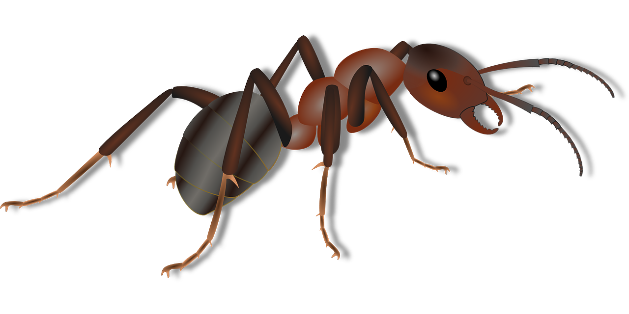 ant facts for kids cool kid facts