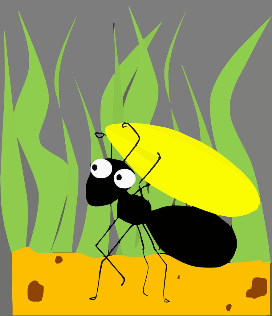 ants clean birds
