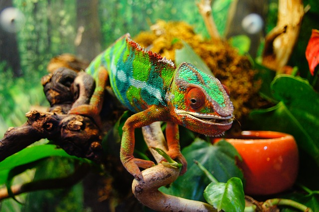 chameleon blending in