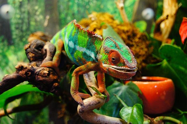 Do Locusts Drink Water