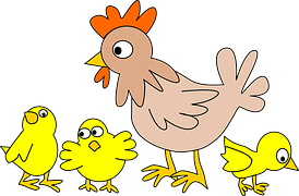 chicken facts for kids