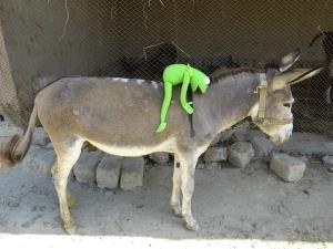 donkeys are heavy