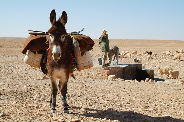 donkeys living in dry climates