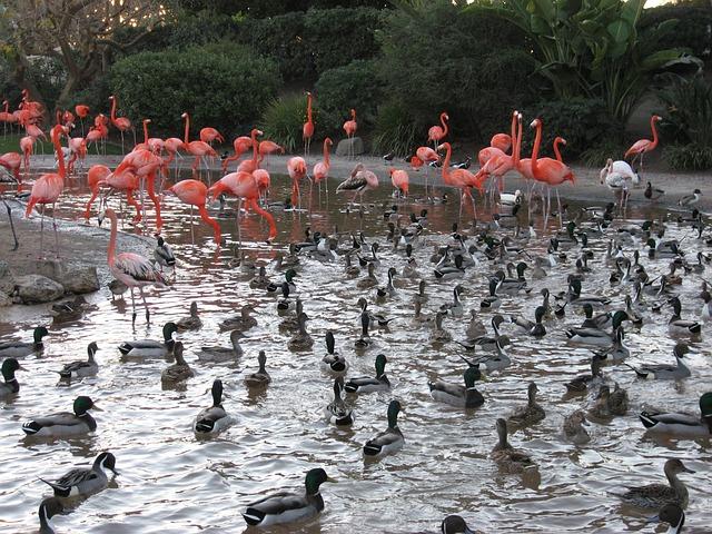 flamingos are water birds