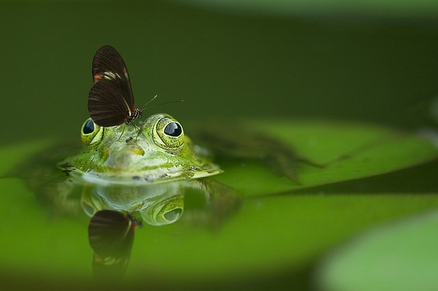 frogs need to live near water