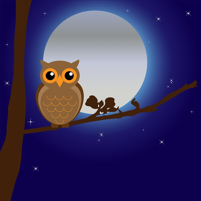 owl facts - Owl Pictures For Kids