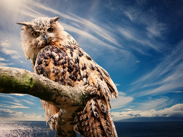 Owl facts for kids cool kid facts for Do owls eat fish