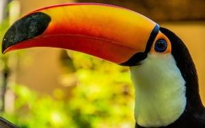 toucan's beak
