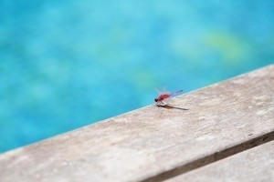 dragonfly near water