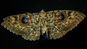 moths plainer than butterflies