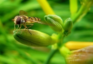 wasp protecting crops