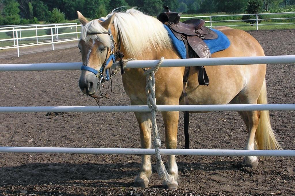 horse asleep standing up