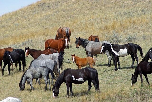 horses different colors