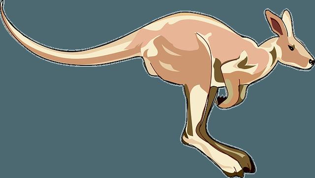 kangaroo hopping jumping