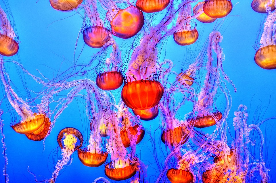 jellyfish for kids