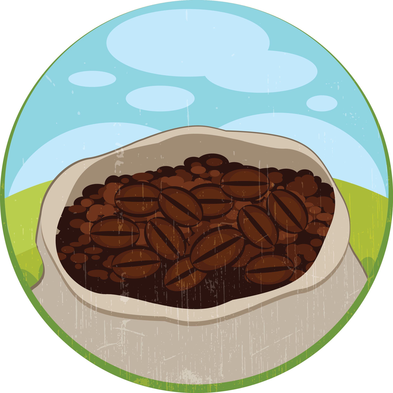 cocoa-bean-facts