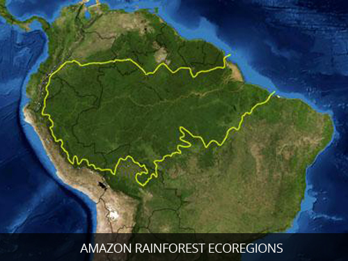 Amazon-Rainforest-Ecoregions