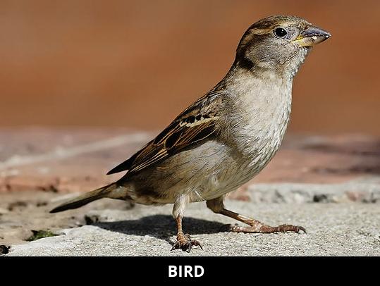 bird standing