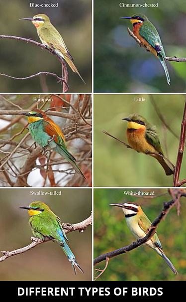 Different-types-of-birds