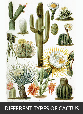 A Cactus Plant Can Be Very Small Or The Largest Type Of Cacti Grow To 66 Feet Tall And Weigh Up 4800 Pounds That S As Heavy Car