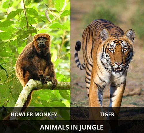 animals-in-jungle