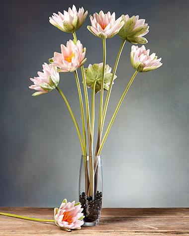lily stems