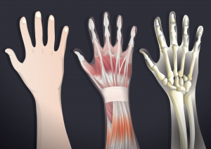 human-bone-facts