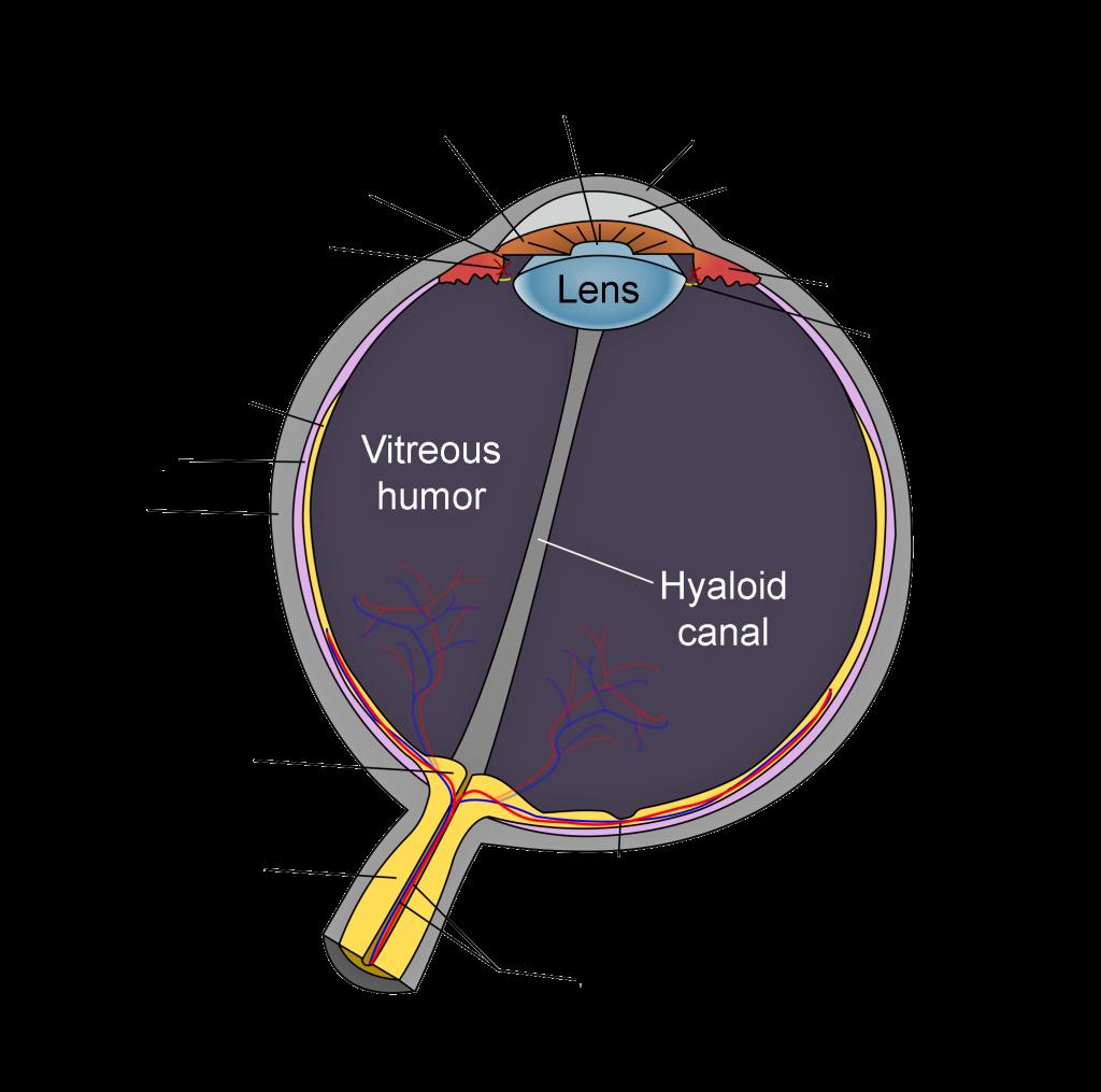 diagram-human-eye