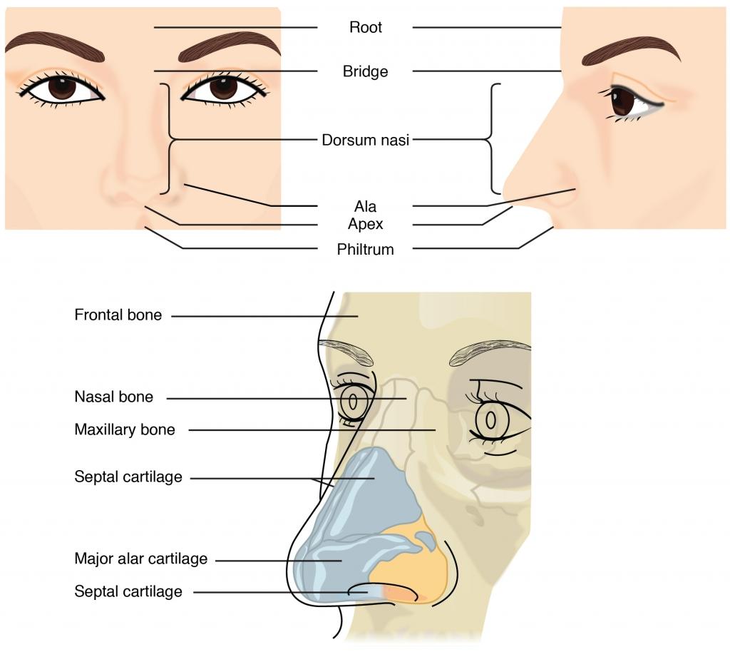 external-nose