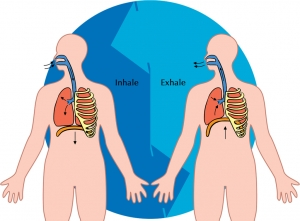 inhaling-exhaling-facts