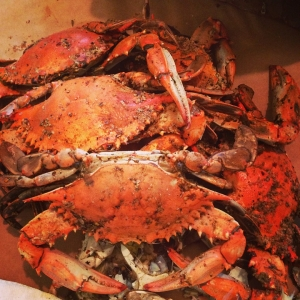 maryland-crabs