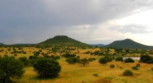 african-savannah