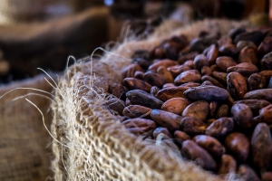 cacao-beans