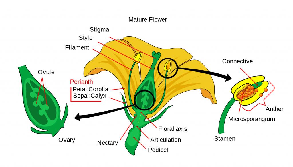 flowering-plant-nectary
