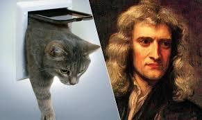 isaac-newton-cat-flap